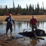 2 friends posing with a bull moose