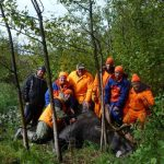 Group of friends posing with a bull moose