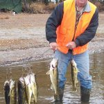 Man posing with haul of walleye fish