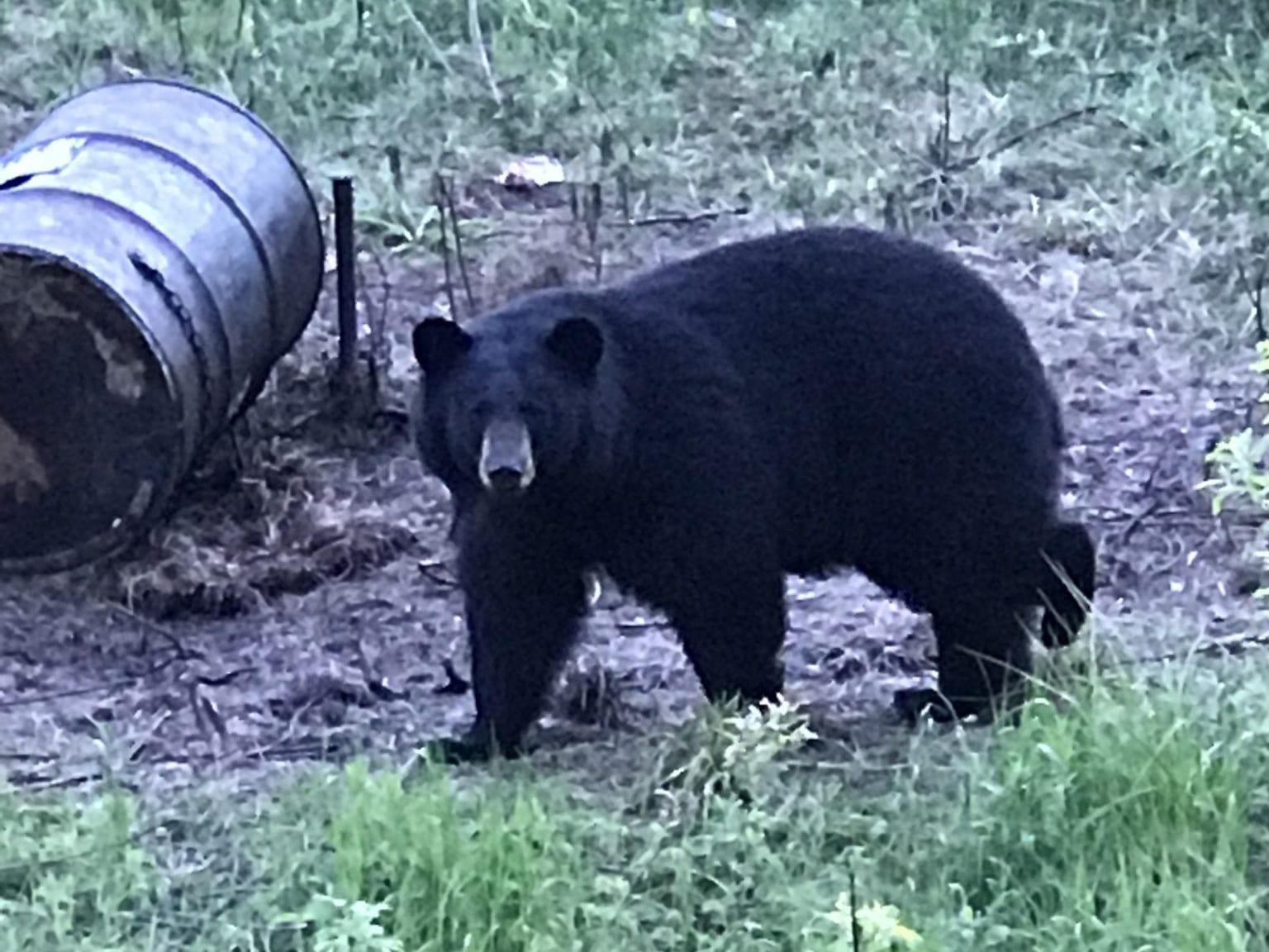 bear hunting banner