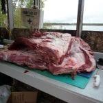 Bull moose Meat