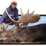 Bull Moose hunting