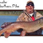 Monster northern pike