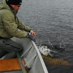 Releasing a pike back into the lake
