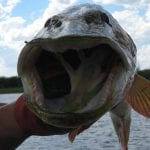 Picture of a big pike mouth