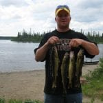 Man posing with his haul of walleye