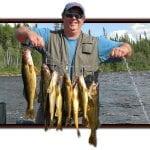 Man Posing with a huge haul of Walleye