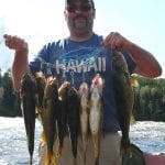 Man posing with a huge catch of walleye fish
